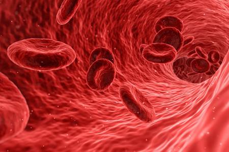 Lijden onze luchtwegen en bloedvaten ook aan files